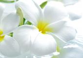Heady Floral